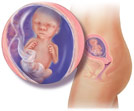 Embryo4